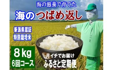 1806008 平成30年産 海の滋養で育てたコシヒカリ 海のつばめ返し8kg「6ヶ月定期便」/ 新潟県認証特別栽培米