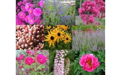 あなたのお庭も大森ガーデンに変身セット(30V-Ⅲ1)