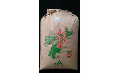 30B-008 【2回分割発送可】鳴滝清流米玄米60kg
