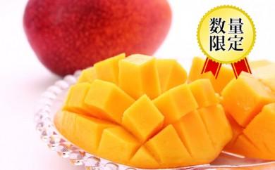 [№5809-2159]宮古島産 完熟アップルマンゴー 1kg