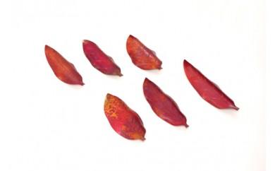1801536 木の葉の箸置きフルセット6個入り