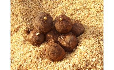 [№5884-0173]上庄里芋 たね芋 2.5kg