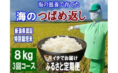 1803072 平成30年産 海の滋養で育てたコシヒカリ 海のつばめ返し8kg「3ヶ月定期便」/ 新潟県認証特別栽培米