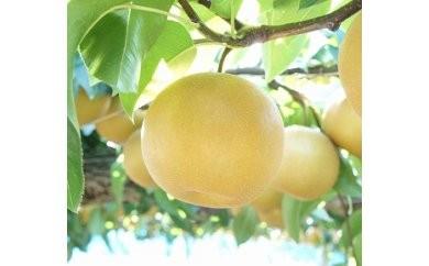 1801131 季節の梨B (豊水梨) 5.0kg