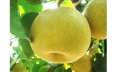 1801130 季節の梨A (幸水梨) 5.0kg