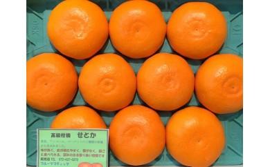 I-32.【高級柑橘】特選せとか 8玉~12玉 化粧箱入り