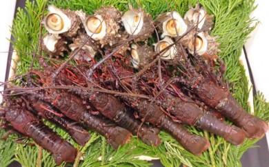 [№5651-0544]漁協からの贈り物(さざえ約1.8kgと伊勢海老約1.2kg)