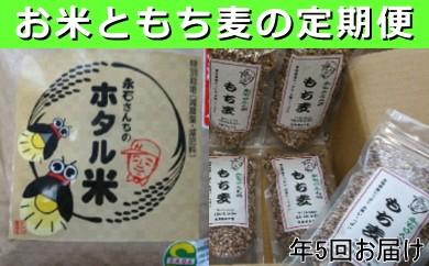 e-7 永石さんちのホタル米もち麦定期便