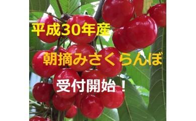 402 ◎園地おまかせ◎朝摘みさくらんぼ(佐藤錦)1kgバラ詰め