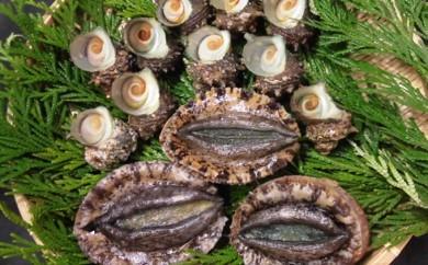[№5651-0558]漁協からの贈り物(さざえ約900gと房州黒あわび約800g) 5月よりお届け