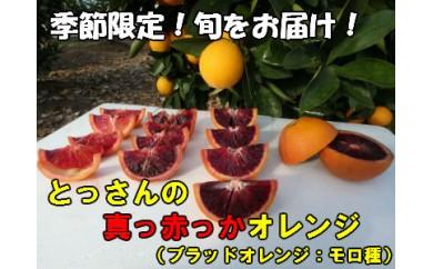 A074 とっさんの真っ赤っかオレンジ(ブラッドオレンジ:モロ種)(配達指定日不可)