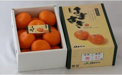 B128 【高級柑橘】佐賀県産はまさき【秀品】12玉(化粧箱入り)