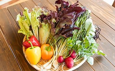 K2-09 【定期便】【野菜ソムリエKANEOKAセレクト】旬の野菜・果物セット