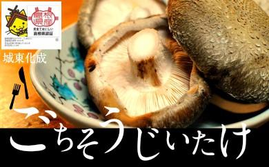 10-JK-2 じょうとうじい茸3袋 きくらげセット