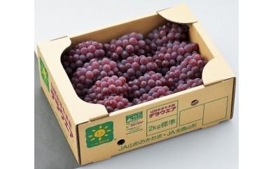 382 【先行予約】南陽市産デラウェア 4kg(2kg×2箱)