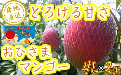 33-06『数量限定』おひさまハニーマンゴー 4L×2玉【30年発送分】