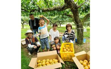 まるごと1本・梨の収穫オーナー<豊水 約250個>【1034651】