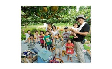 まるごと1本・梨の収穫オーナー<幸水 約150個>【1034650】