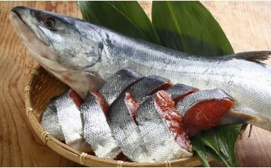 [02-062]北海道浦河前浜産 特選 新巻鮭(特大) 丸ごと切身パック