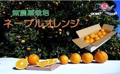 マツベジ A-2-26 ネーブルオレンジ