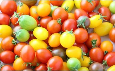 A1400 【みやき町産収穫】田中さんレインボートマト1.4キロ!【5色6品種】ドライトマト1袋付き