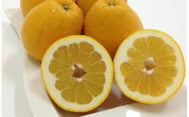 C25-42.ミヤモトオレンジガーデンの「河内晩柑 約4kg」