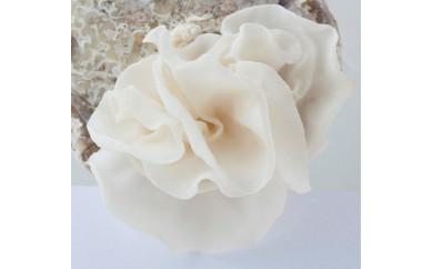 白いきくらげ「白美茸(はくびたけ)」(乾燥)3袋
