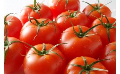14_フルーツトマトと磐田産農産物の詰合せ[2018]
