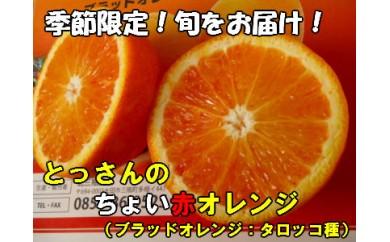 B213 とっさんのちょい赤オレンジ(ブラッドオレンジ:タロッコ種)(配達指定日不可)