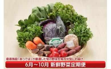 【F-809】産直施設「あっでば」直送!新鮮野菜定期便(6月中旬より配送開始 入金期限:H30.5.25)