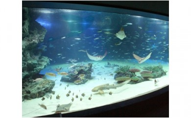 No.098 サンシャイン水族館 及び SKY CIRCUS サンシャイン60展望台入場券セット 大人2名分