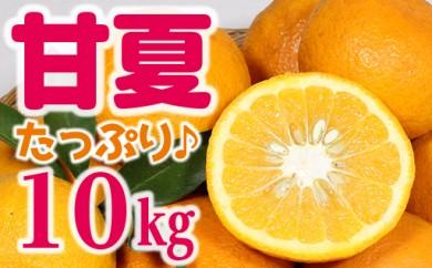 天神山の甘夏10kg