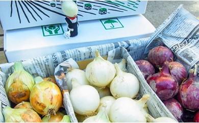 夏季限定「玉葱ひとすじ。中島農園」3色玉葱セット