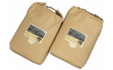 C-14 高本さんちのお米 コシヒカリ 5㎏×2袋