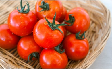 大地の恵み「新鮮!トマトバラエティーセット」