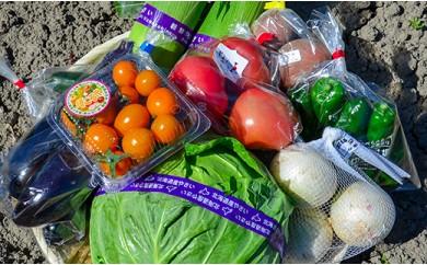 大地の恵み「新鮮!夏野菜セット」