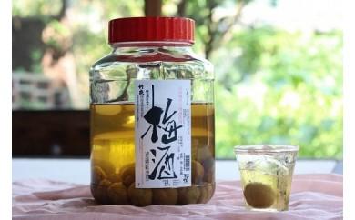 D-17 竹泉 純米山田錦仕込 氷温熟成 梅酒