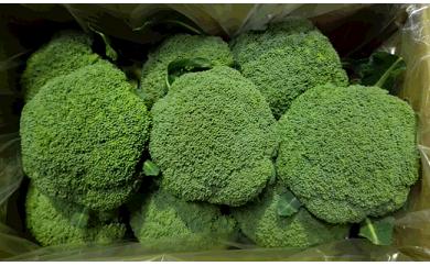 [024036]ふくい農園のおいしいブロッコリー