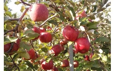 0014-106 ラ・フランスとりんごの詰合せ 5kg
