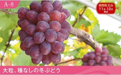 A-8 紫苑【1房】