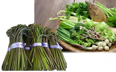[№5823-0397]採れたてわらび1kgと山菜セット(3~7品程度) 山形 朝日連峰