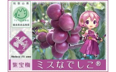 C-10 紫宝梅『ミスなでしこ®』青梅4kg