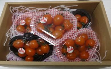 野菜ソムリエが作る高原スイートミニトマト