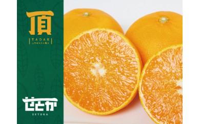 C31-6.三代目みかん職人がつくる柑橘の大トロ【せとか】3kg
