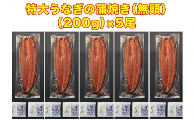 C3-0806/鹿児島県産特大うなぎの蒲焼き(無頭)200g×5尾