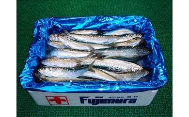 朝獲れ直送!鮮度抜群の獲れたて鮮魚 5kg