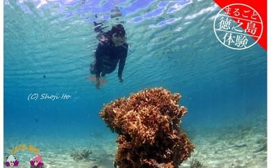 195~キラキラ輝く徳之島の海を満喫~ サンゴ礁スノーケリングコース(半日)