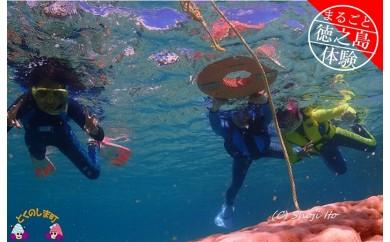 196 ~キラキラ輝く徳之島の海を満喫~ボートで向かうサンゴ礁スノーケリングコース(半日)
