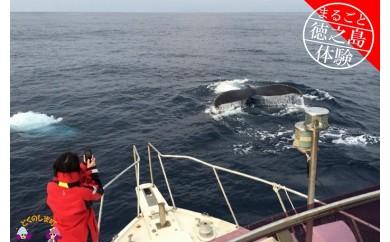 194~さぁ徳之島の海へ旅しよう~感動の瞬間!クジラウォッチング体験(3時間)