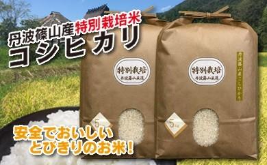 お米のおいしさ伝えたい!特別栽培米コシヒカリ5kg×2